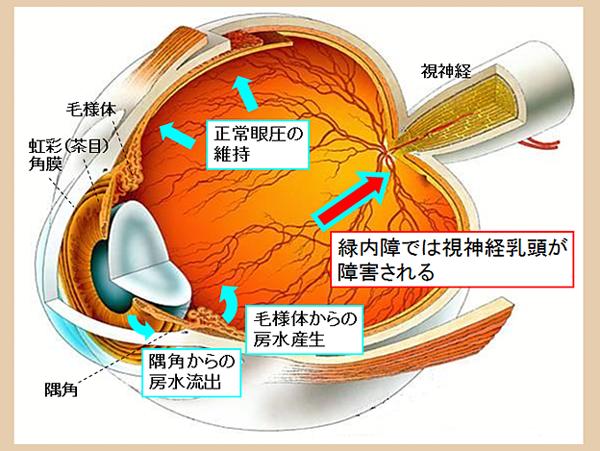 非接触眼圧計イメージ